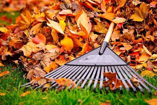 raking-leaves-in-fall